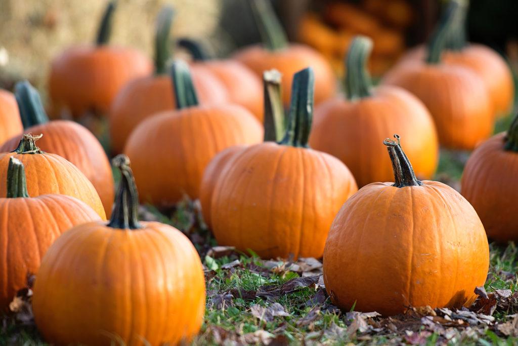 Proloco La Verna - Halloween